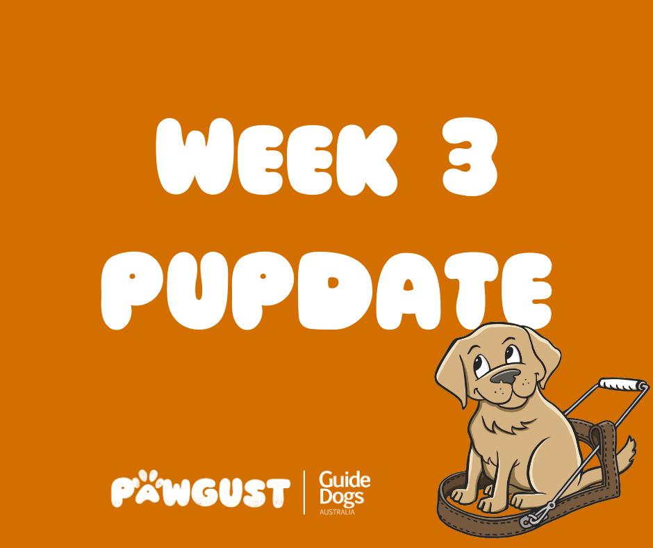 Week 3 PUPDATE