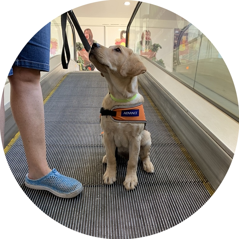 Image shows Jasmine sitting perfectly on an escalator.