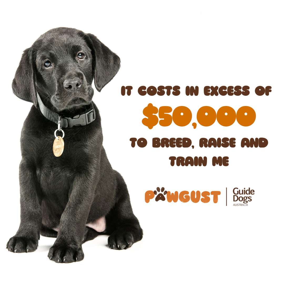 Cost of a Guide Dog