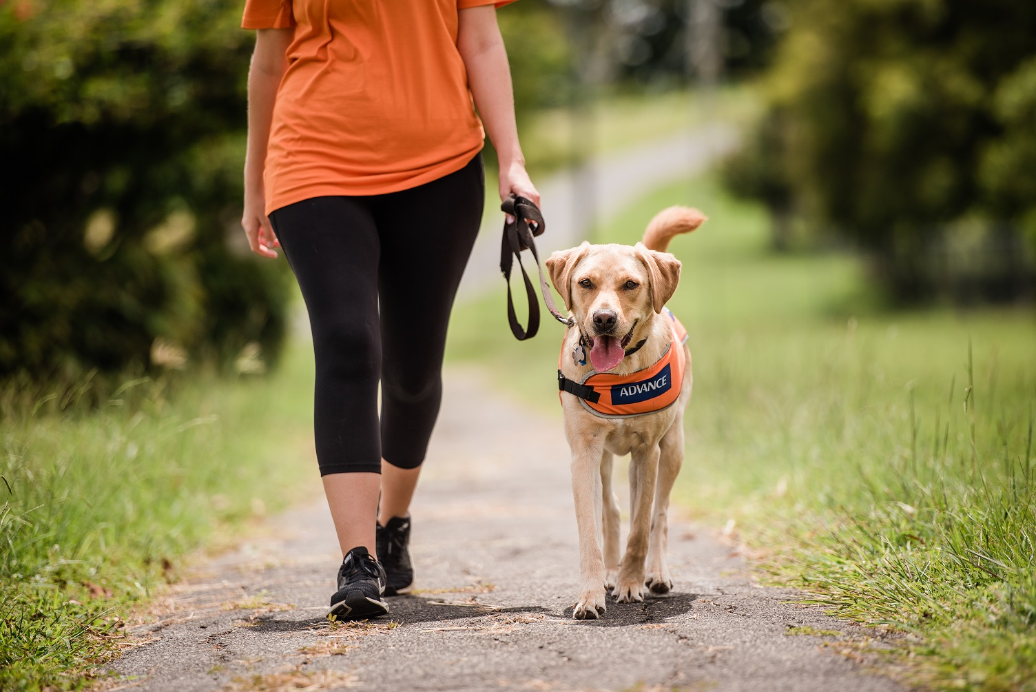 Image shows lower half of person walking with a golden Labrador Guide Dog walking by her side wearing an orange coat.