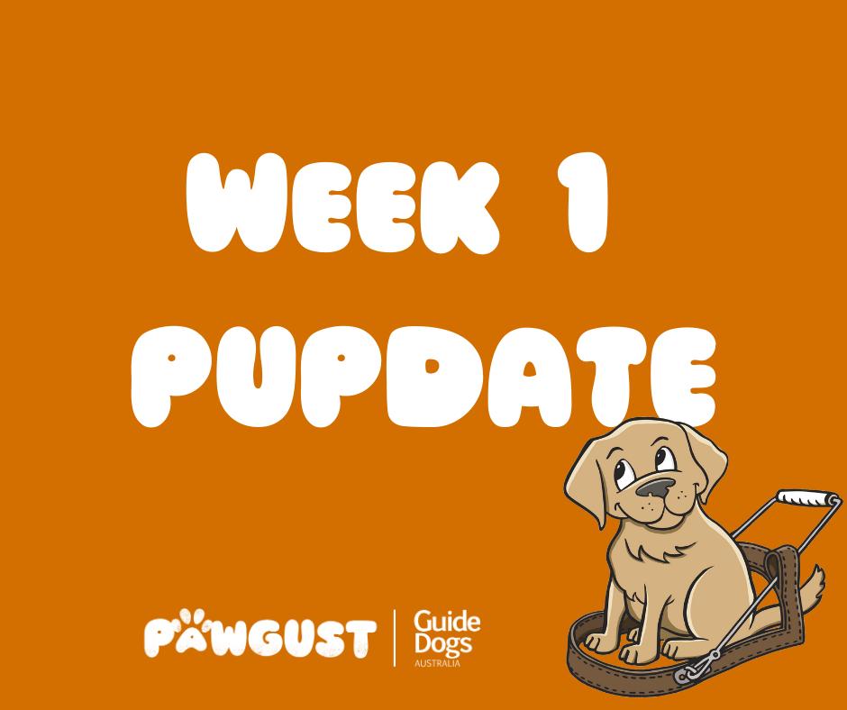 Week 1 PUPDATE