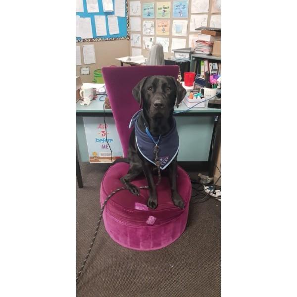 Teacher's Pet (no pun intended).