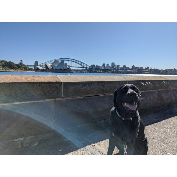 Thank you for donating to the page! This is Caesar on one of his favourite walks - from Kirribilli to Mrs Macquarie's chair and back. Always results in a very tired pup at the end of the day!