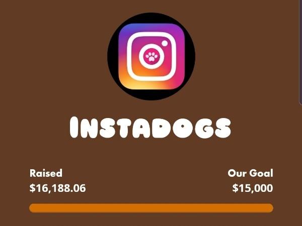 Guide Dogs Instadogs