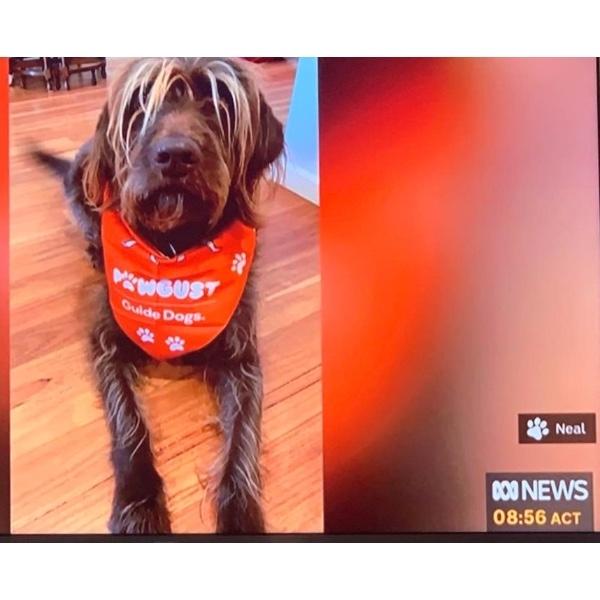 ABC TV - international dog day!